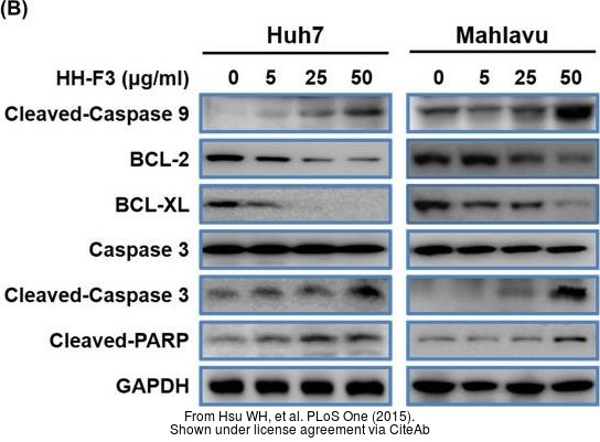The WB analysis of Bcl-2 antibody [N1N2], N-term was published by Hsu WH and colleagues in the journal PLoS One in 2015.PMID: 25849560