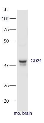 IHC-P of GRP282