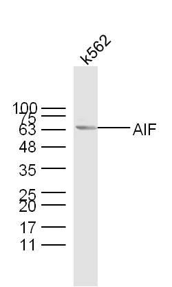 IHC-P of GRP189