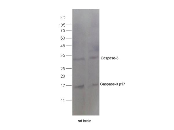 IHC-P of GRP193