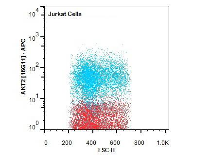 Flow Cytometry of Rat anti-AKT2 antibody.