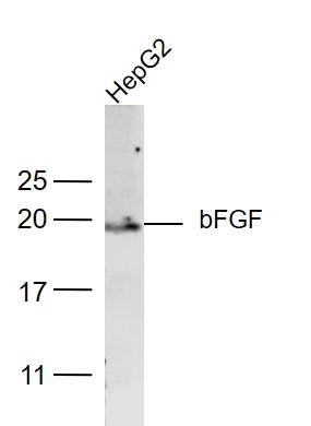 IHC-P of GRP223