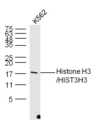 IHC-P of GRP229