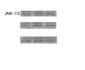 IHC-P of GRP252