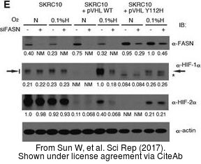 The WB analysis of HIF1 alpha antibody was published by Sun W and colleagues in the journal Sci Rep in 2017.PMID: 28775317