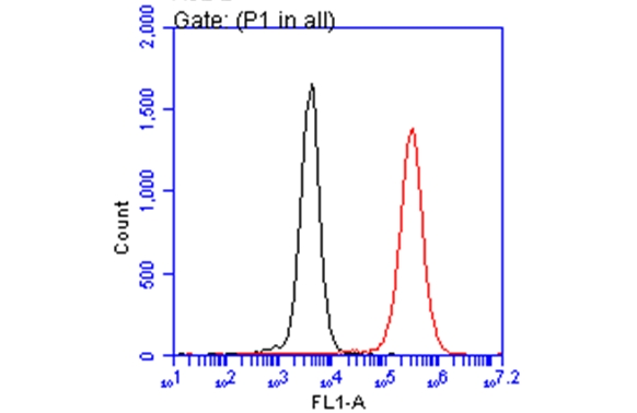 Iba1 antibody  (GRP545) detects AIF1 protein by flow cytometry analysis. Sample:  THP-1 cell. Black: Unlabelled sample was used as a control. Red:  Iba1 antibody    dilution: 1:50. Acquisition of 20,000 events were collected using a Dylight 488-conjugated