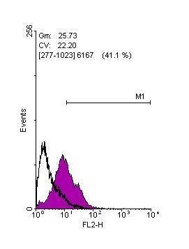Flow cytometry on human embryonic stem cells, staining with KLF4 (GRP475)antibody at 1:100 dilution(purple) or rabbit IgG (black).