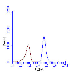 SQSTM1 antibody [N3C1], Internal (GRP467) detects SQSTM1 protein by flow cytometry analysis.Sample: HeLa cell fixed in 4% paraformaldehyde at 4ºC for 5 min.Brown: Unlabelled sample was also used as a control.Blue: SQSTM1 antibody [N3C1], Internal]  dilut
