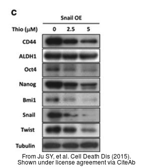 The WB analysis of Twist1/2 antibody was published by Ju SY and colleagues in the journal Cell Death Dis in 2015.PMID: 26136074